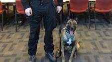 A Winnipeg police canine