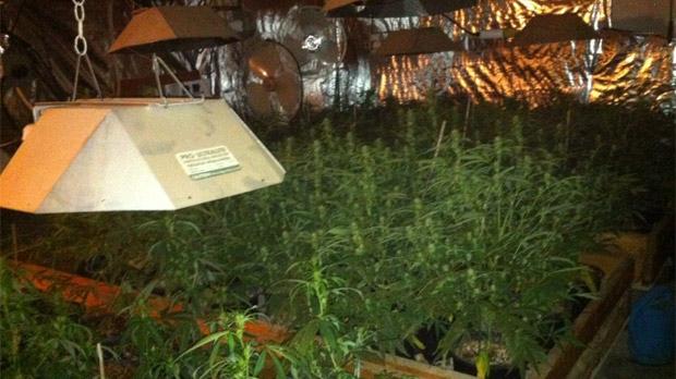 Elphinstone grow-op raided