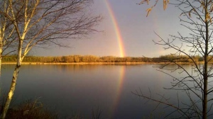 Rainbow at Shoal Lake #40,Ontario. Photo by Diana Sumner.