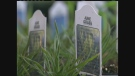 CTV Winnipeg: Gardening season begins with native