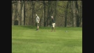 CTV Winnipeg: Plan to lease golf courses narrowly passes EPC
