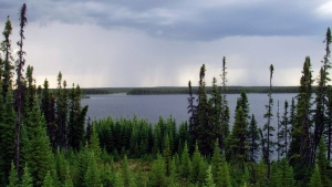 boreal forest, unesco, recognition, forest, world heritage site. (File image)