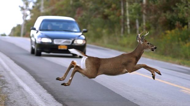 MPI ranks worst areas for deer-vehicle collisions