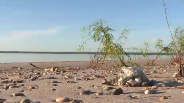 After Tuesday's storm the water of Lake Winnipeg rolled up and over Patricia Beach, leaving hundreds of dead birds behind as the water receded.