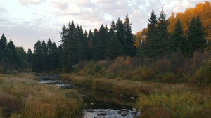 Jackfish Creek in Riding Mountain National Park. Photo by Sandy Stritz.