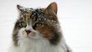 Carman cat. Photo by Barb Toews.