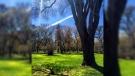Spring in Munson Park. Photo by Jeff Vernaus.