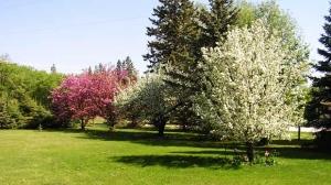 Springtime at Balmoral Manitoba. Photo by Cindy.