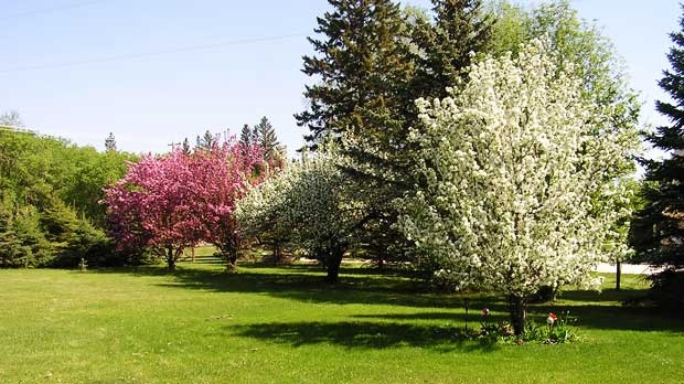Springtime at Balmoral Manitoba. Photo by Cindy.