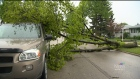 Downed tree blocks St. James area street