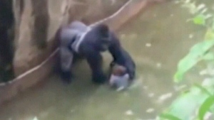 CTV National News: Backlash over gorilla shooting