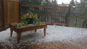 Dime to loonie size hail fell in Swan River. Photo by Marianne.