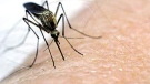 The current adult mosquito population is near the end of its life cycle, the city said.