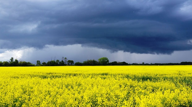 Prairie thunderstorms in Lorette, MB. Photo by Melanie Chow.