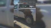 Bee swarm truck
