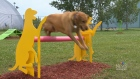 Niverville dog park one of a kind