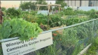 Winnipeg Harvest launches Garden-to-Kitchen
