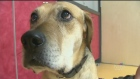 Pet Ed: Helping dogs cope with storms