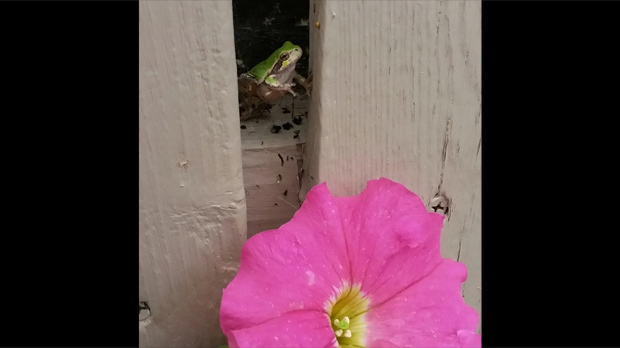 A frog hanging out in West Pine Ridge. Photo by Virginia Dyck.