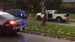 Pickup truck rams two cruisers attempting to avoid police bu hits a utility pole a short time later on Parkside Drive in Waterloo on Friday, Oct. 21, 2016