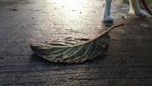 A leaf fallen during the fall season
