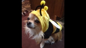 Axl the Bumblebee