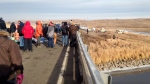Dakota Access oil pipeline protesters congregate on a long-closed bridge on a state highway near Cannon Ball., N.D., on Nov. 21, 2016,. (James MacPherson / AP)