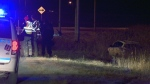 The violent spree ended when the driver lost control and wound in in a ditch (CTV Montreal/Cosmo Santamaria)