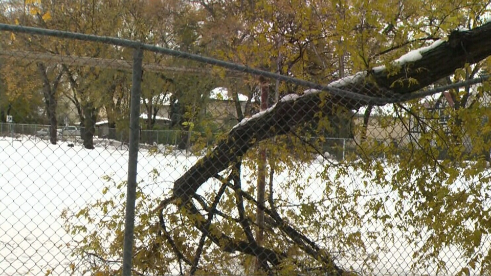 30,000 city trees impacted by Storm