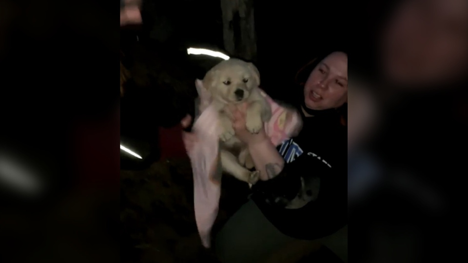 Manitoba Underdogs Rescue