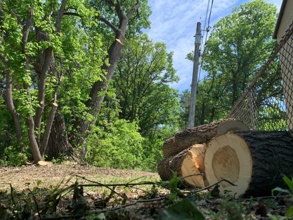 hydro line tree clearing