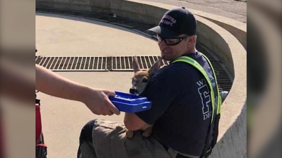 firefighter deer rescue