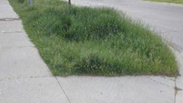 Boulevard mowing dispute