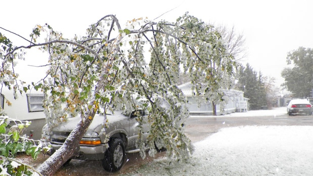 Damage from the Manitoba snowstorm is shown in West Pine Ridge, near Birds Hill Provincial Park, on Oct. 4, 2012. (photo courtesy James Dyck)